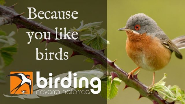 Birding Navarra, because you like birds