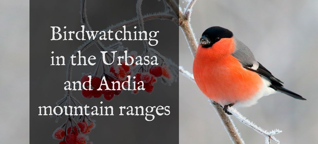 Birdwatching in the Urbasa and Andia mountain ranges